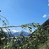 Burghütte